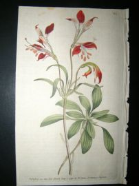 Curtis 1790 Hand Col Botanical Print. Striped-Flower'd Alstroemeria 125